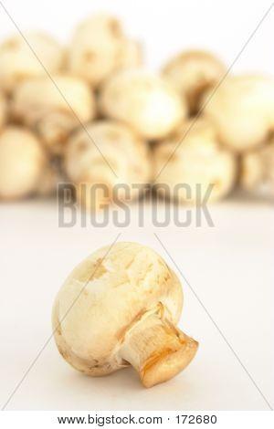 Button Mushroom 2