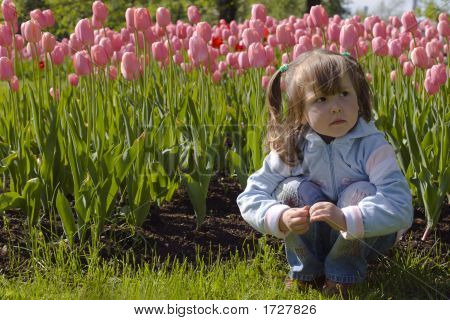 Dreaming In Tulips