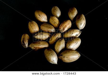 .Pecan Nuts On Black