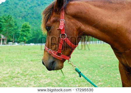 Brown Horse In Farm