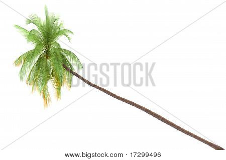 Palm tree isolated on white background with clipping path