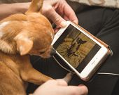 Постер, плакат: Chihuahua Looking At Photo On Cell Phone