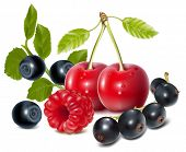 Photo-realistic vector of cherries, black currant, raspberry and blueberries with leaves.