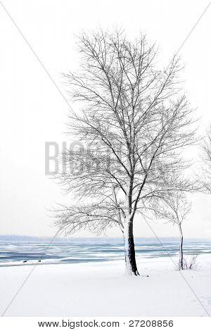 Winter landscape with tree near frozen river