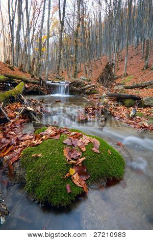 Brook in leafless autumn forest