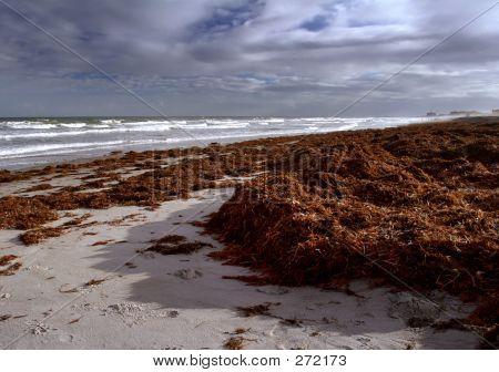 Kelp Strewn Beach