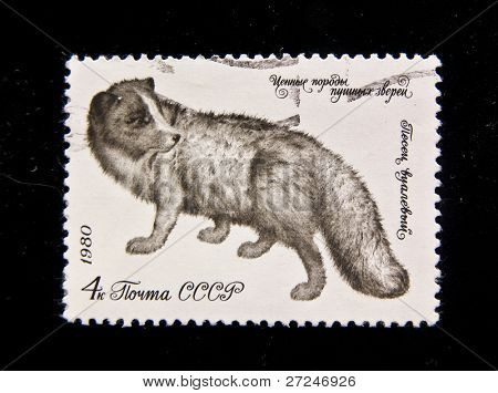USSR - CIRCA 1980: A stamp printed in the USSR shows Arctic fox (Alopex lagopus), circa 1980