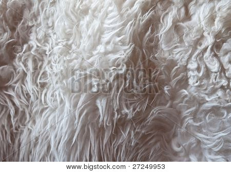 Light-gray fur texture