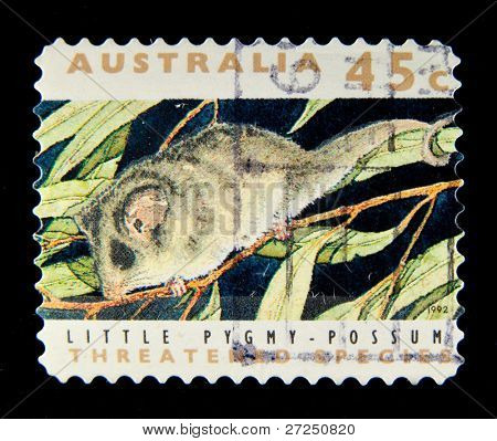 AUSTRALIA - 1992: A stamp printed in Australia shows image of a little pygmy possum, series, 1992