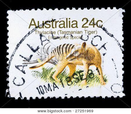 AUSTRALIA - CIRCA 1980s: A stamp printed in Australia shows Thylacine - Thylacinus cynocephalus, circa 1980s