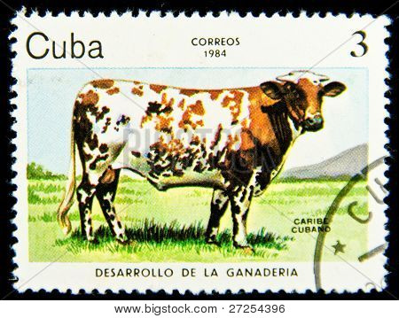 CUBA - CIRCA 1984: A Stamp printed in CUBA shows image of a Grazing Cow with the description