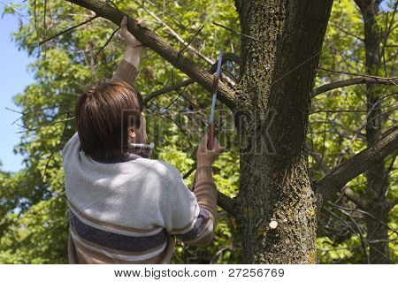man sawing a branch of tree with an handsaw