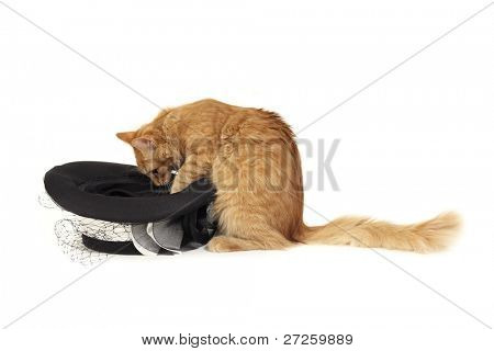cat magician with hat isolated on white background