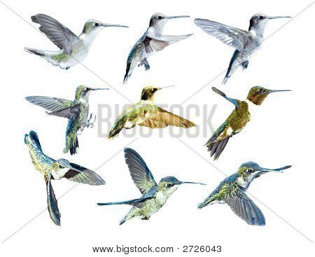 Hummingbirds In Flight_Vector