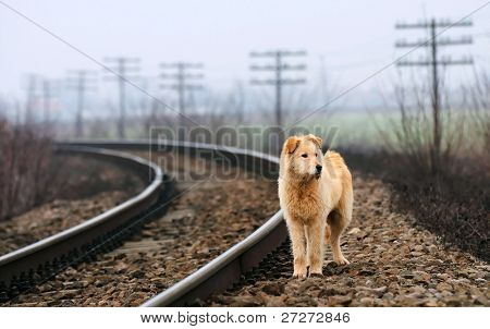 Waiting Lonely Dog