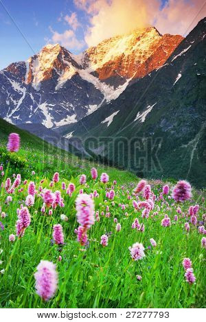 Mountain flowers in sunset light