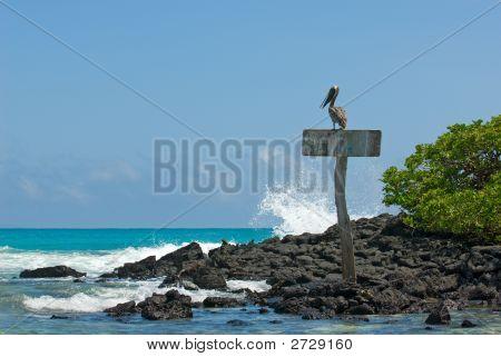 Pelican In The Beach