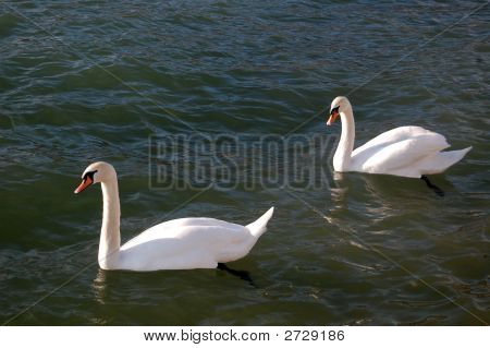 Swan, Two