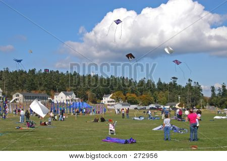 Kites 6773