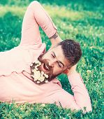 Bearded Man With Daisy Flowers In Beard Lay On Meadow, Lean On Hand, Grass Background. Man With Bear poster