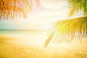 The Beach Sea Over Sun / Coconut Palm And Tropical Beach - Palm Tree Foreground And Ocean Background poster