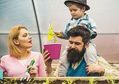 Family Garden. Family Garden In Greenhouse. Happy Family Work In Greenhouse Garden. Family Garden Cu poster