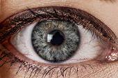 Macro shoot on womans eye iris. Human eye in close up shoot. poster