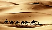 stock photo of dromedaries  - Sahara caravan - JPG