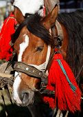 stock photo of blinders  - Adorned horse - JPG