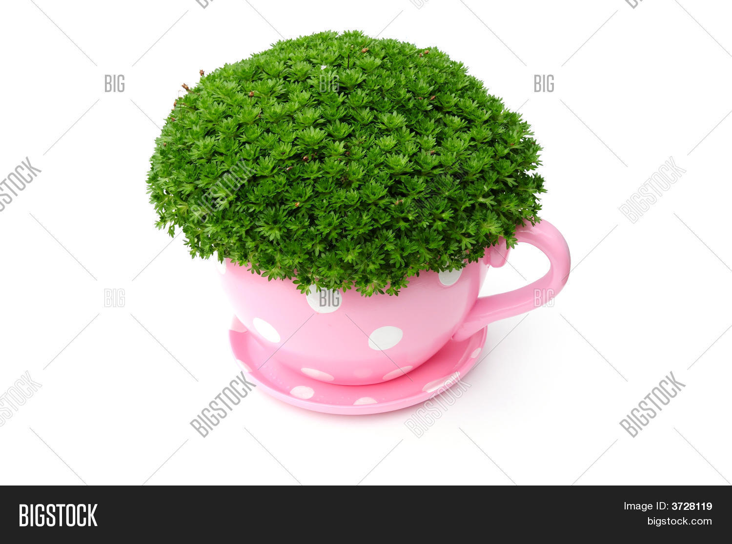 Giant Tea Cup And Saucer Planter Stock Photo Stock Images Bigstock