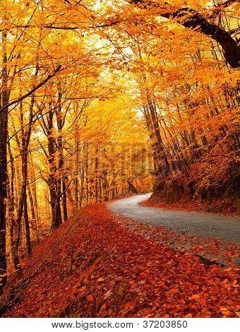 Paisagem de outono com estrada e belas árvores coloridas
