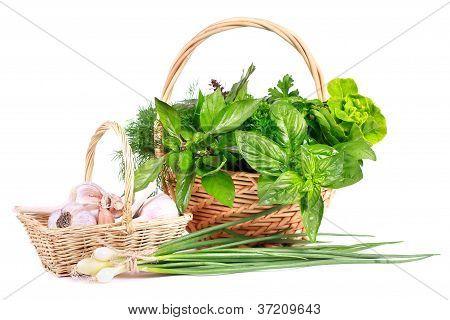Fresh green herb.