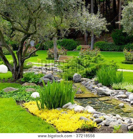 garden with pond and oliva trees in asian style