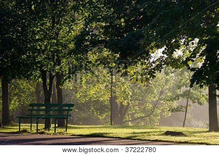 Mist in the park