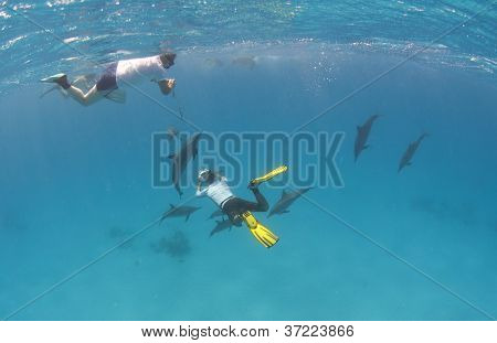 Snorkellers With Wild Spinner Dolphins