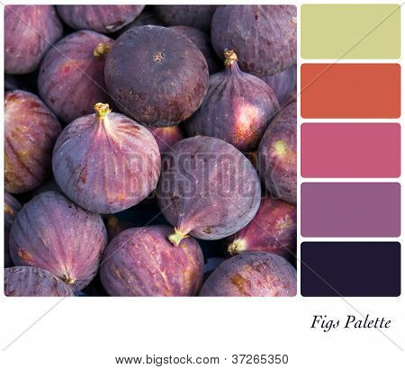 Fresh fig background colour palette with complimentary swatches.