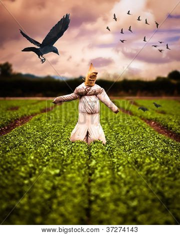 Scarecrow in field of crops with crows