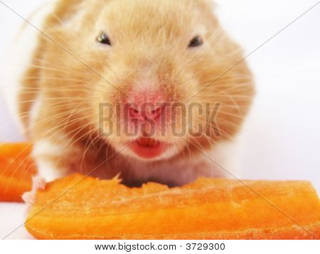 Mad Hamster With A Carrot.