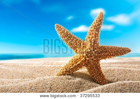 Fishstar On The Beach