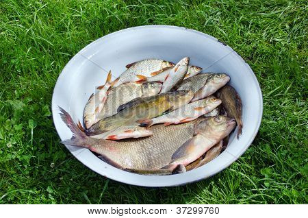 Fishing Caught In Steel Bowl