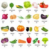 picture of rutabaga  - illustration set vegetable with calories on white - JPG
