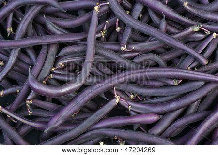 Purple Wax Snap Beans