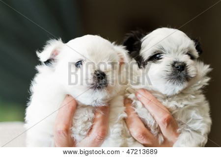 Holding Puppies