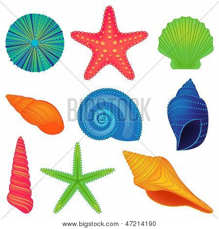 Vector Collection of Colorful Shells