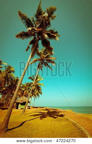 Beautiful Sunny Day At Tropical Beach With Palm Trees And Bungalow Ocean Landscape In Vintage Style