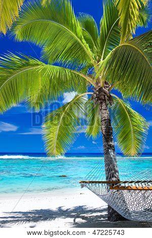 Empty hammock under palm tree on tropical beach