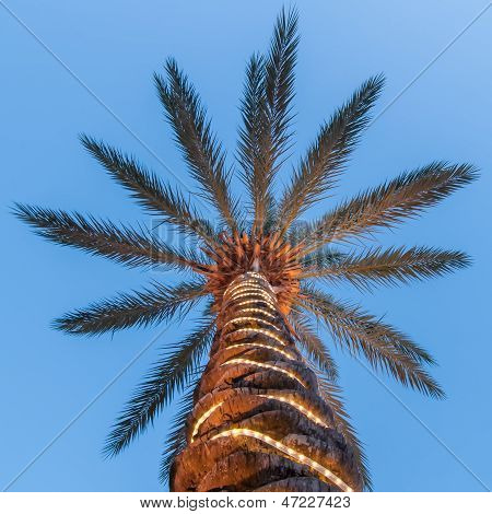 Palm Tree With Lights