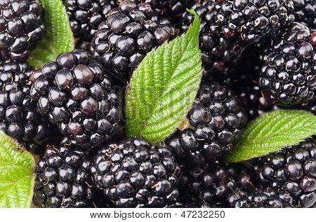 Blackberries With Green Leaf. Background Of Berries
