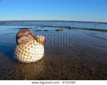 Golf Ball On The Beach With Shells