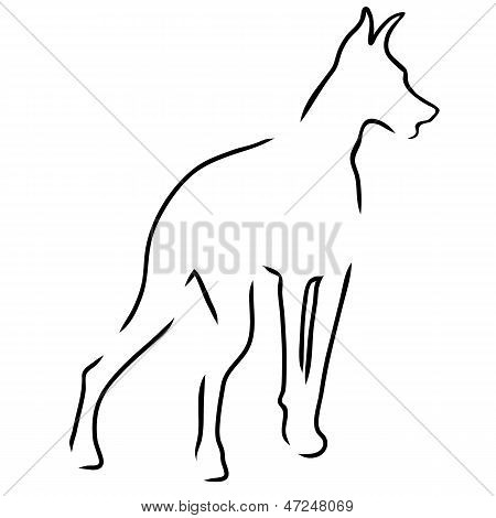 Doberman Outline
